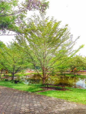 Park Nature Trees Green Relaxing ASIA Borneo Pontianak