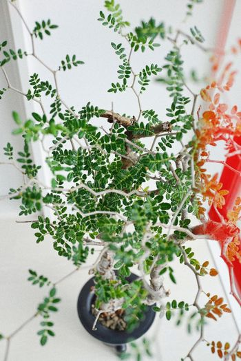 High angle view of plants in plate on table