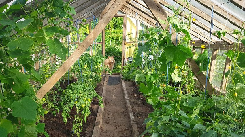 Growth Day Outdoors Plant Nature Green Color No People Greenhouse Plant Nursery Freshness Dog