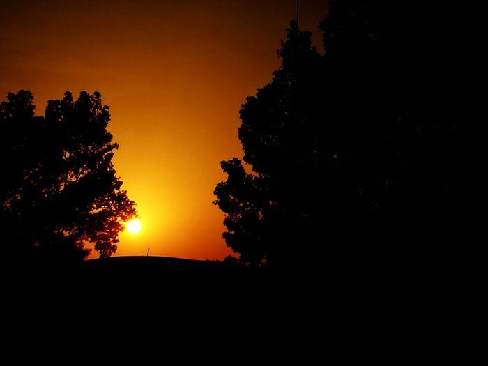 Silhouette Sunset Tree Nature Tranquil Scene Sun Scenics Sky Tranquility Beauty In Nature No People Sunlight Landscape Tree Area Dubai Dubai❤ Mydubai MyDubai ❤