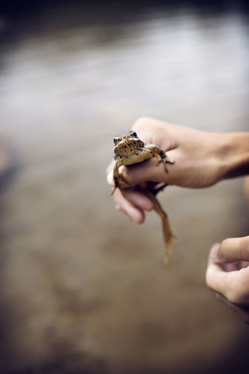 Person holding leaf in water