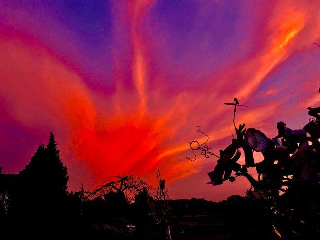 Sunset Sky Silhouette Orange Color Plant Cloud - Sky Tree
