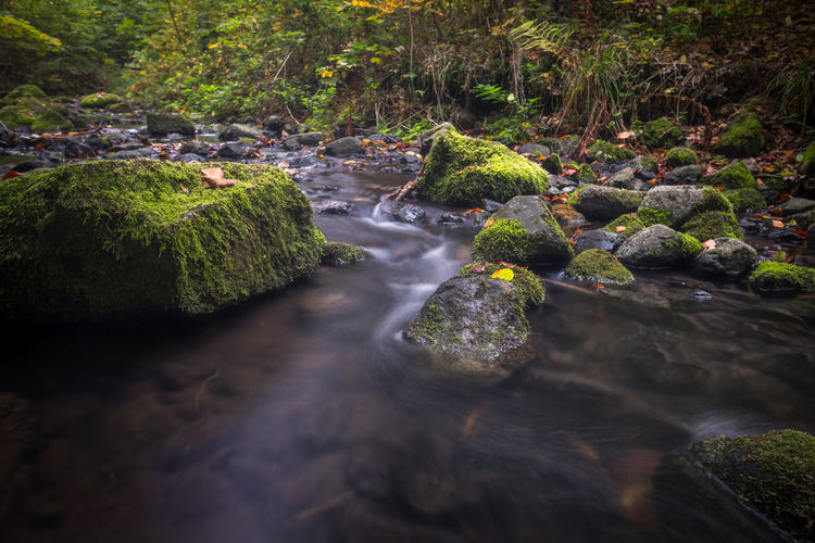 Beauty In Nature Blurred Motion Day Flowing Flowing Water Forest Land Long Exposure Moss Motion Nature No People Outdoors Plant River Rock Rock - Object Running Water Scenics - Nature Solid Stream - Flowing Water Tree Water