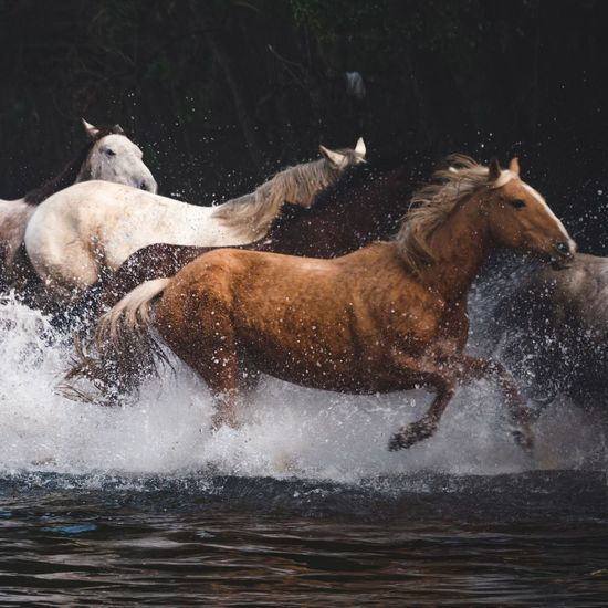 I've had the pleasure of shooting with the Panasonic team and a bunch of very talented photographers & bloggers over the past few days to test out @lumix_au's new GX8. Witnessing close to 100 horses galloping through this waterway was definitely a thrilling experience! Lumix LUMIX GX8 Horses Learn & Shoot: Layering Service Animals Capture The Moment