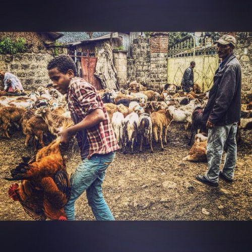 AddisPicOfTheDay Awdamet HappyEthiopianNewYear Ethiopiannewyear 2008 Gebeya Sholla Addis  Addisababa Ethiopia Ethiopian Africa AddisEveryDay AddisLiving AddisEveryDay Streetphotography BirukGerbiPhotography