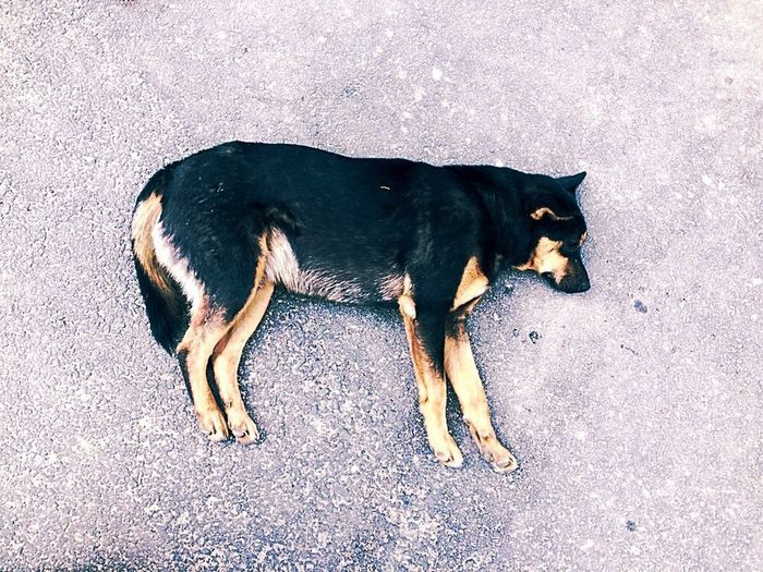 On My Way Saw This On My Way Dog Sleeping  Alone Time At College Animals Life In Motion Had Fun Walking Alone...