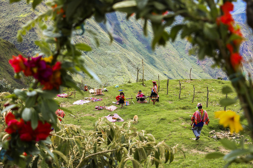 Hard workingp people in Bombón community - Cusco Peru Community Cuzco Green Color Hardwork Highlands Lifestyles Real People