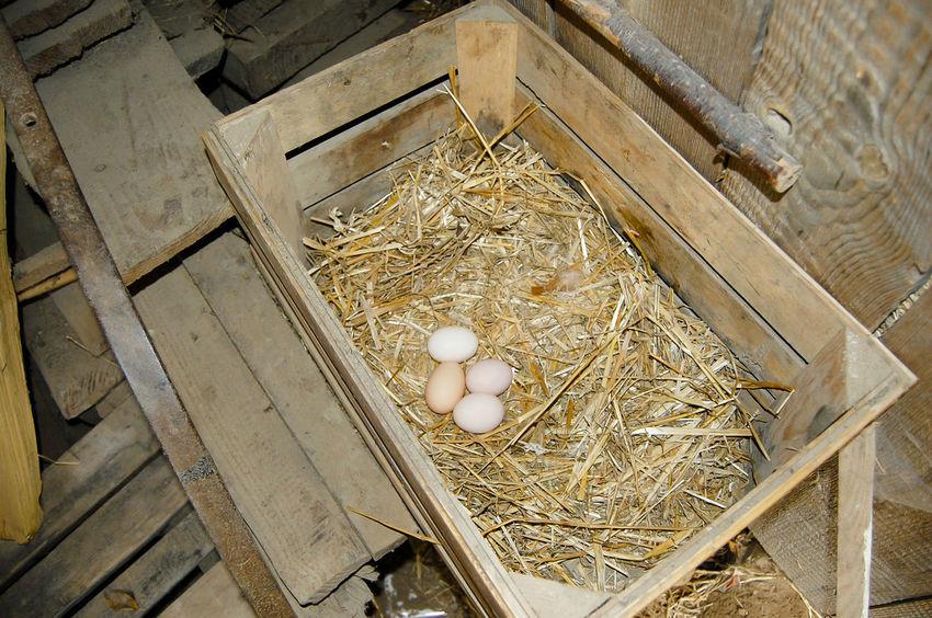 Free Range Chicken Eggs Farm Chicken Egg Egg Free Range Straw
