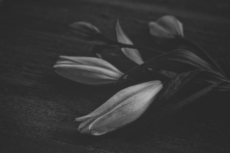 Lilies Lilies Lilies Black And White Flower Close-up No People Petal Indoors  Flower Head Freshness Fragility Nature Day