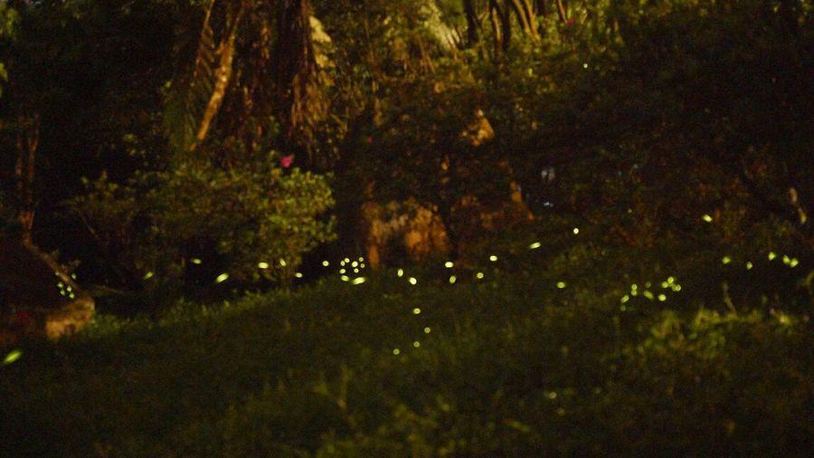 為數不多但很感動 Check This Out Nature Firefly