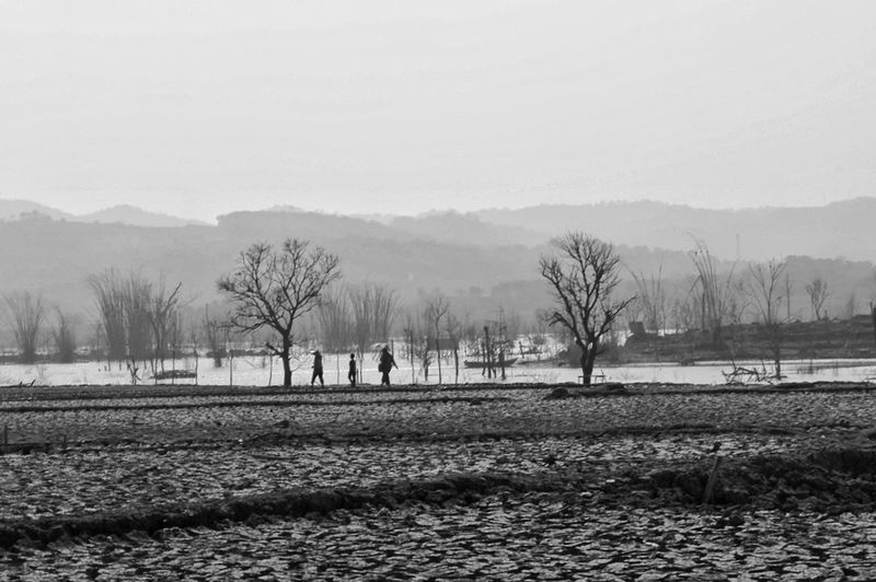Fineart Bw Blackandwhite Black And White Tree Bare Tree Oil Pump Winter Fog Sky
