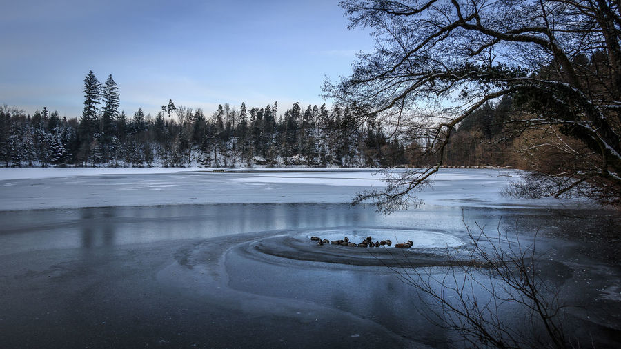 Ein Wintermorgen am Bergsee, Januar 2017. Bare Tree Beauty In Nature Blue Cold Temperature Ducks Ducks At The Lake Frozen Ice Lake Landscape Nature No People Outdoors Sky Snow Tree Water Winter