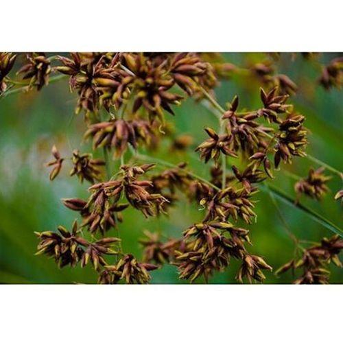 Yo todo lo que tengo, que es nada, se lo di. Sunnyafternoon Leaves Tree_captures Tardecaleña Photowalk2015 Humedallababilla Lagunalababilla Ciudadjardin Cali Colombia Streetphotography Nikonphotography
