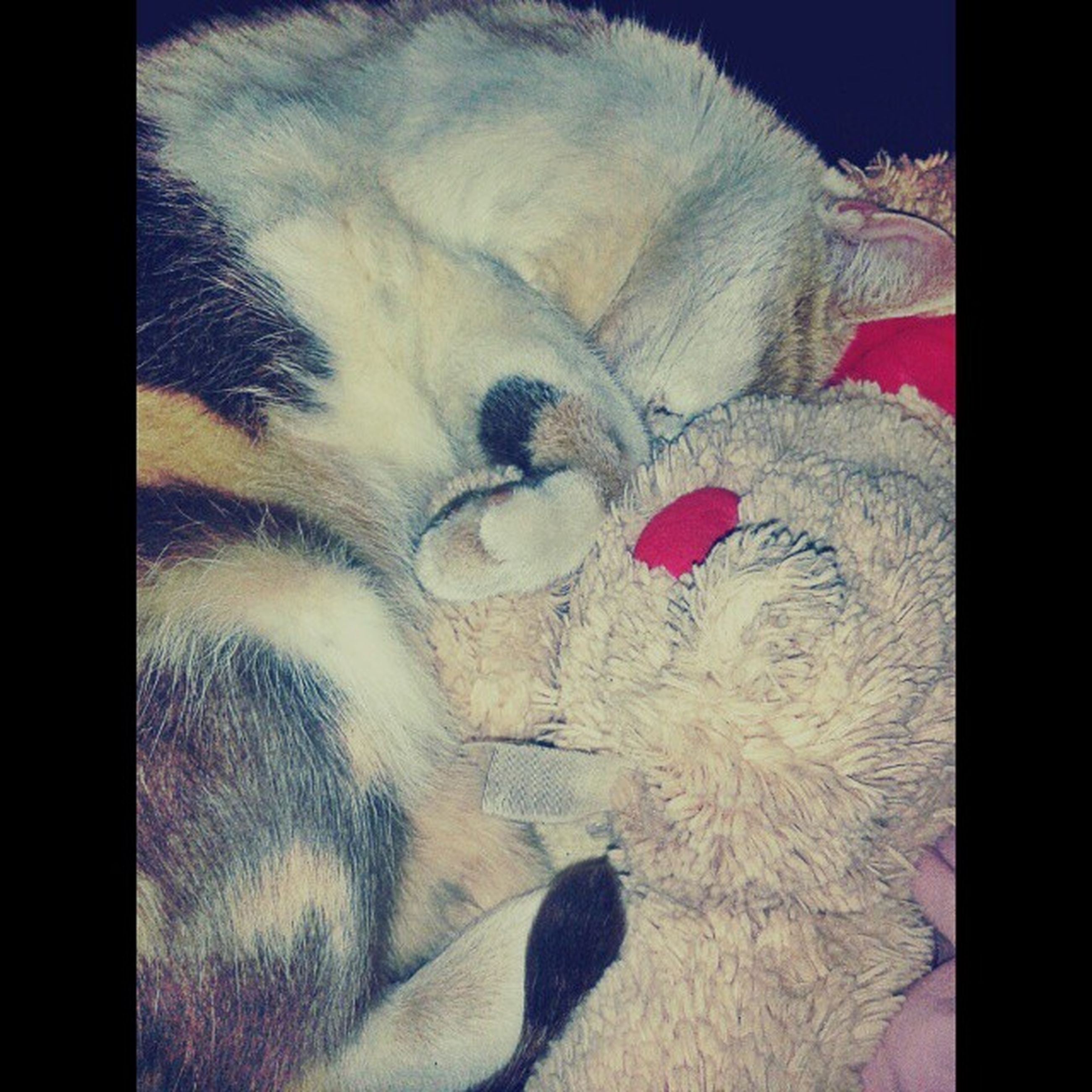 transfer print, animal themes, domestic animals, indoors, pets, one animal, auto post production filter, mammal, dog, relaxation, domestic cat, sleeping, close-up, lying down, resting, home interior, cat, animal head, no people, bed