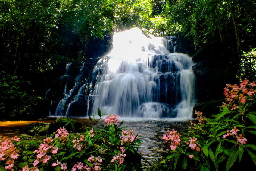 Mun dang waterfall 5th floor14 Waterfall Water Motion Nature Beauty Beauty In Nature Scenics Tree Outdoors Forest No People Travel Destinations Growth Day Flower Freshness Vacations Rock - Object Snapdragon Wild Flowers EyeEmNewHere The Week On EyeEm Beauty In Nature Freshness Travel
