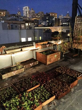 Check This Out Hello World Relaxing Taking Photos Enjoying Life San Francisco California Rooftopgarden Rooftop Vegetables City City Life Organic Citygarden Bay Area