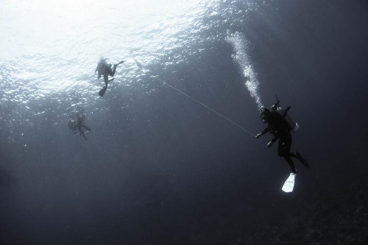 Diver Sea