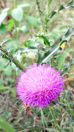 Gaudalupe State Park Natrual Beauty  Flower Check This Out