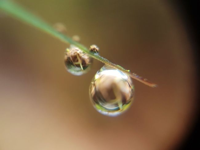 Drop_master Dewdrops Dew On Grass Dewdrops_Beauty Water Dew Drops Grass Dewdrops On Grass DewShots Macro_collection Beauty In Nature Freshness Close-up Focus On Foreground Day Macro Photography Nature Macro Beauty Outdoors S7 Edge Photography Samsung Galaxy S7 Edge No People Nature