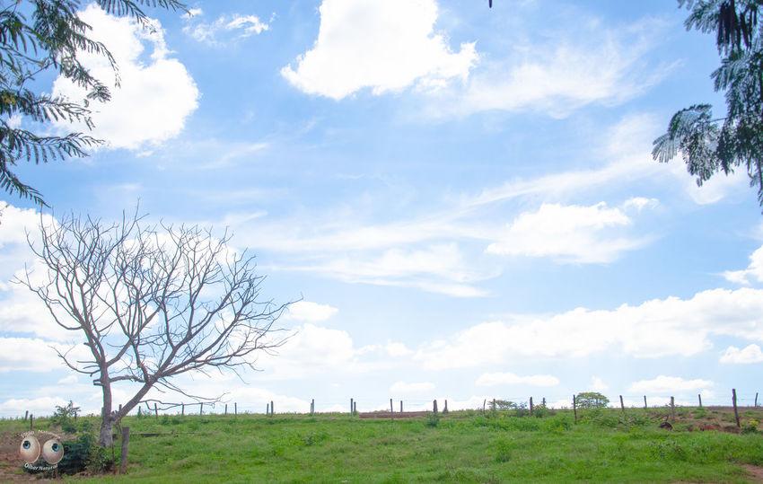 Poesiadasimagens Poesia Poetica Phtographydocumentary Arte Green Photoart Natureza Nature Photography Olharnatural Vitaonatureza Victornatureza Fotografiaéarte Fotografia Natural Terra  Azul Verde Campo Nikon D7000 Nikon Nikonphotography