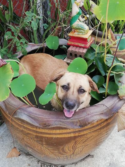 Portrait of dog standing in pot