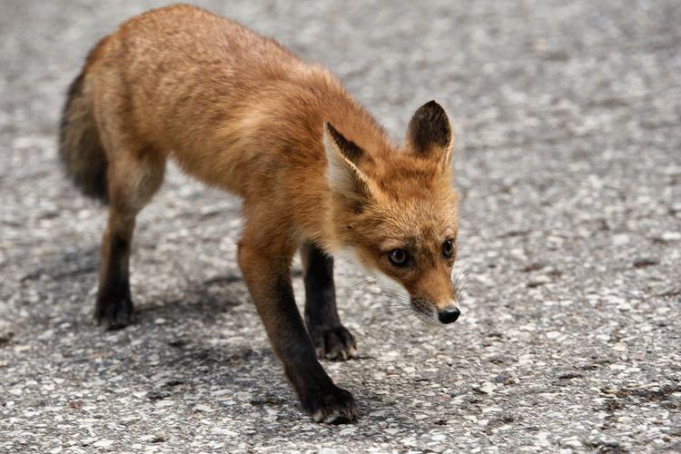 Curious Animal
