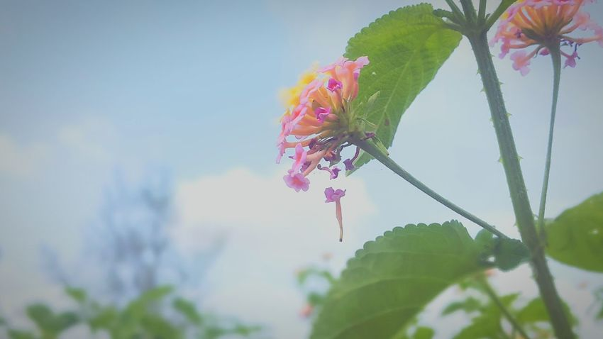 Its all about timing Nature Flower Leaf Outdoors No People Beauty In Nature Freshness Close-up Plant Growth Tree Day Sky Fragility Branch