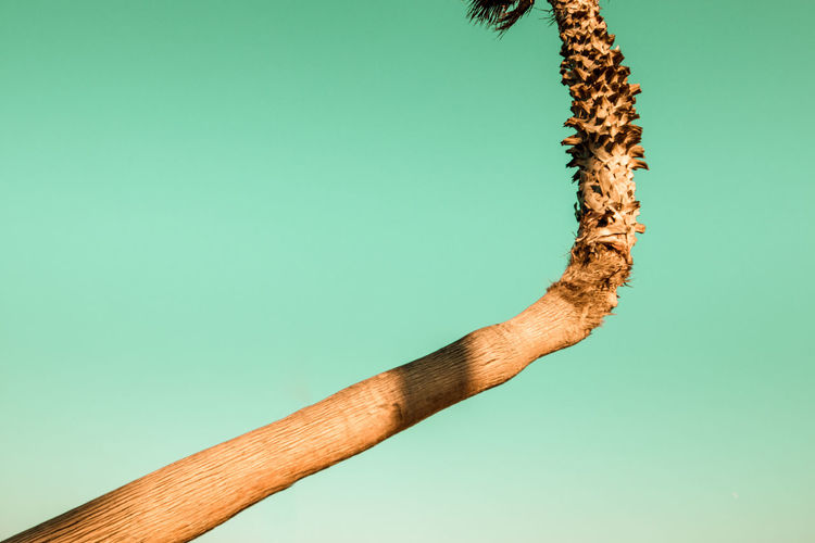 Close-up of dead plant against blue background