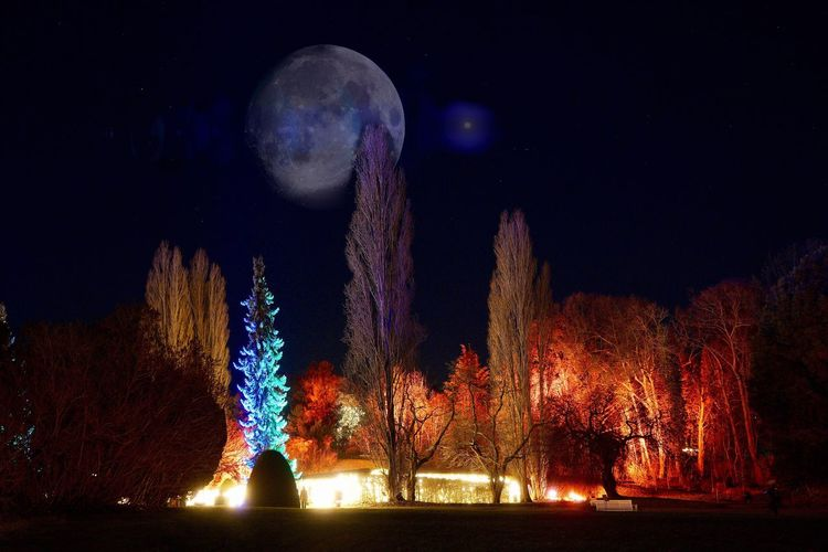 Open Edit Tadaa Community Night Illuminated No People Multi Colored Nature Outdoors Sky Motion Flame Firework Collage Botanischer Garten Berlin Moon Nightphotography