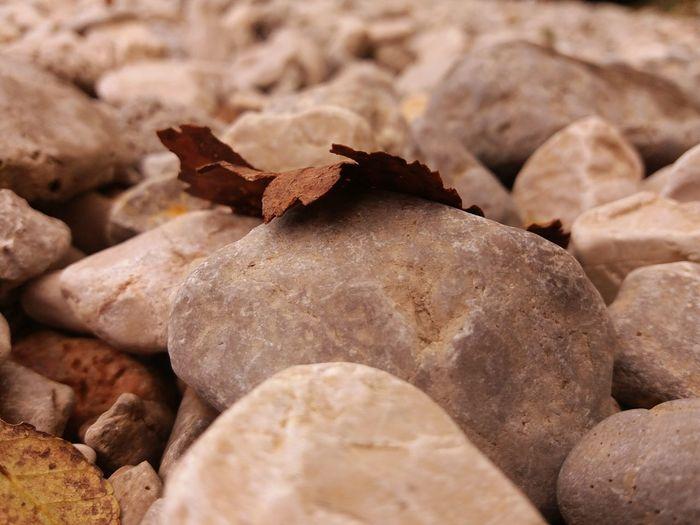 Leaves Stone