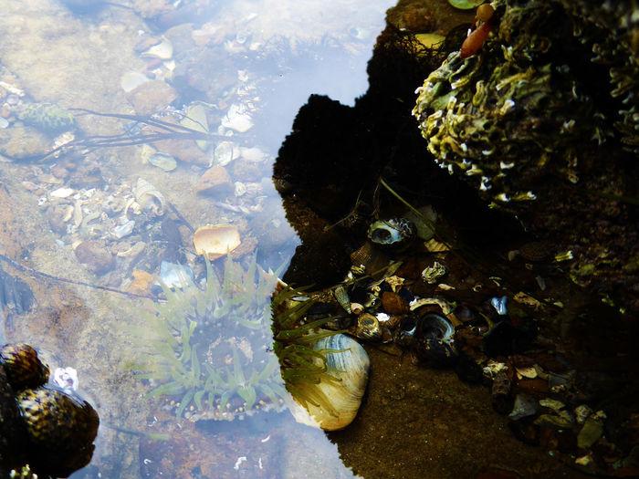 Anenome Australia Barnacles Learn & Shoot: Layering Light And Shadow Nature Rockpool Sea Seashells Wildlife Showcase: November Reflection