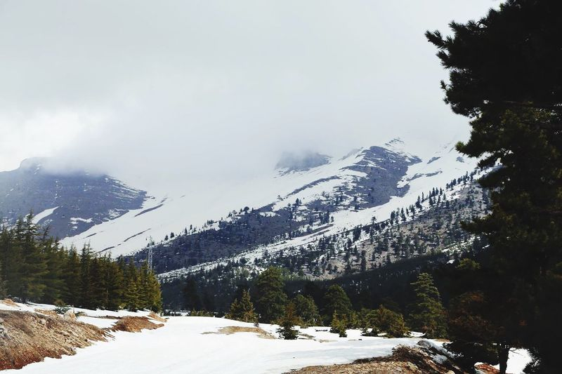 Snow Mountain Winter Cold Temperature Snowcapped Mountain Mountain Range Beauty In Nature Scenics Outdoors Tree Forest Landscape No People Nature Sky Day