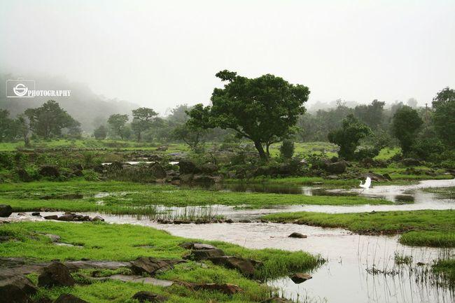Unmeshshirsath Usphotography Trees Traveling Green Grass Pond Mountain Swan Rainy Days☔