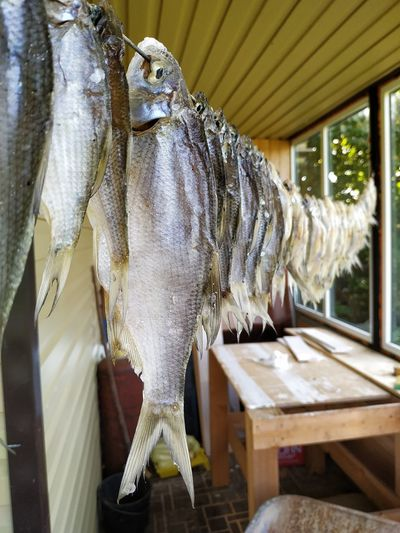 Close-up of fish hanging on table