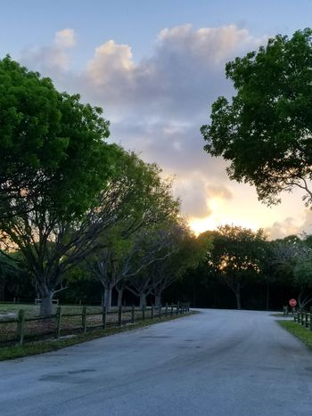 Delray Beach Florida Florida Skies Road Road Sign Tree Cloud - Sky Road Sky Outdoors Day Nature Beautifulskies Tranquility Nature Florida Nature ADayToRemember Beautidul Day Beautiful View Sunset Sunlight Sunset_collection Sunset Silhouettes The Great Outdoors - 2017 EyeEm Awards