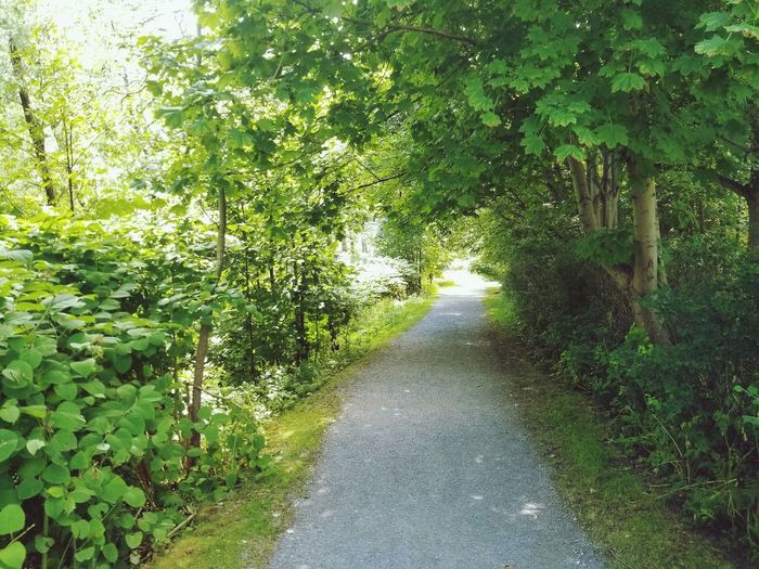 Path to walk