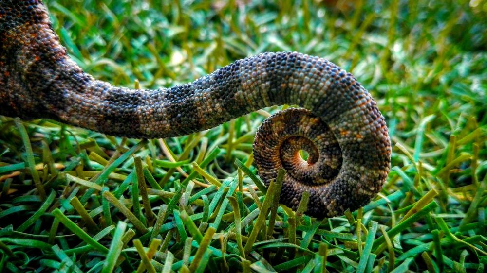 Nature One Animal Beauty In Nature Nofilter Animal Themes Photooftheday Lizard Lizard Tail Beautiful Beauty In Nature Amazing Close-up Blessedsunday