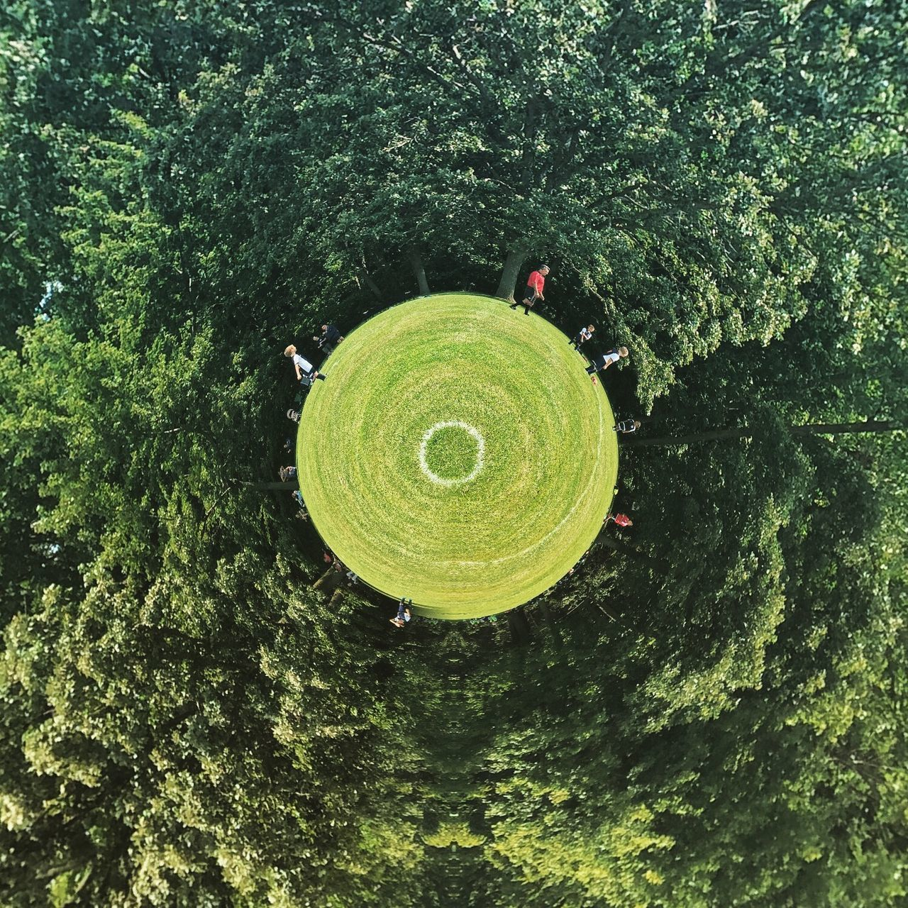 tree, circle, green color, growth, outdoors, no people, nature, day, high angle view, beauty in nature, tranquility, forest, scenics