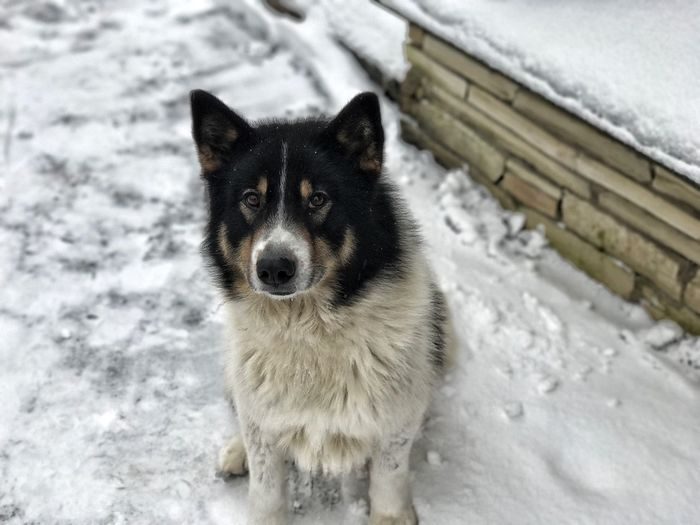 Cold Temperature Snow Animal Themes Winter Mammal Dog Looking At Camera Pets Portrait No People One Animal Domestic Animals Outdoors Day Close-up Be. Ready.