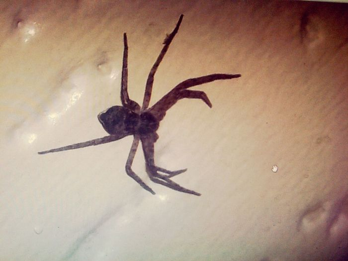 Found this spider today... freaked out! Spider Freaking Out Check This Out Cheese!