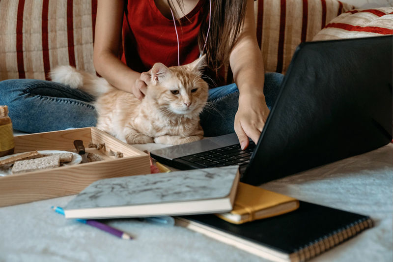 Home office, work space, work from home concept. young woman with laptop and cat working at sofa.