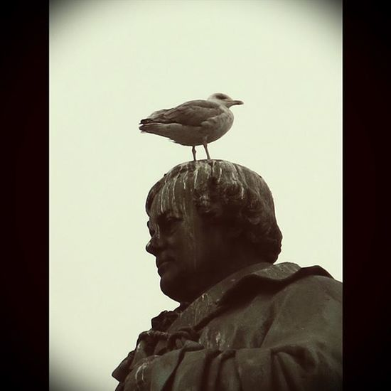 VOYAGE EN IRLANDE - 5 septembre - Une mouette se repose sur la tête de Daniel O'Connell à Dublin... et y laisse un souvenir! 😁 IRISH TRIP - September 5 - A seagull resting on Daniel O'Connell's head in Dublin... and leaving a keepsake on it 😁 Ireland Ireland_gram Irlanda Irlande Visitireland Irelandinspires Dublin Dublincity Loves__europe Loves_ireland Loves_dublin Loves_statues Loves_monuments Loves_sculpture Sculpture Discoverdublin Igireland Denkmal Igersdublin Igersireland Bird Loves_birds Oiseau Instafunny ShitHappens loves_nature