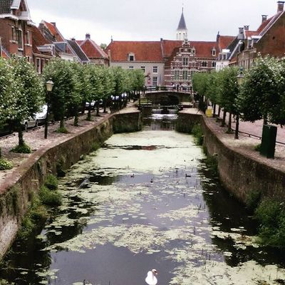 Amersfoort View Dutchview Cityview CityWalk Oldcity Tower Swan Canalview Canal Beautiful Loves_netherlands Holland_photolovers Nederland Netherlands Thenetherlands Igholland Ignl Ig_nl Trees Ig_nlpics Nofilter Ig_holland Ig_nederland Ignederland igersnl
