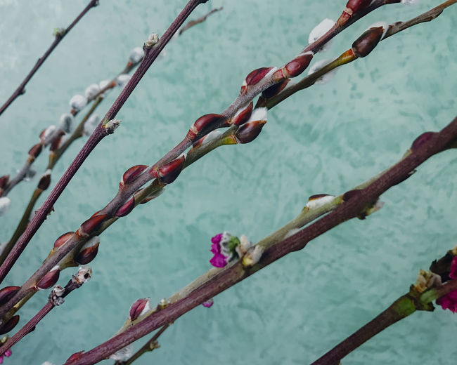 Branch against water