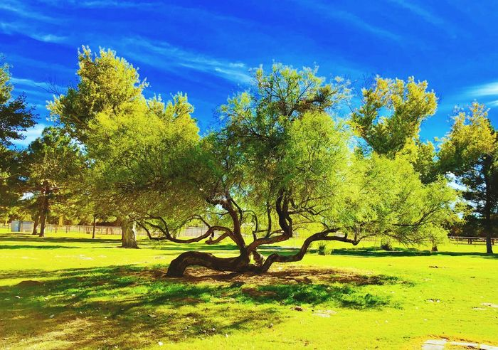 Perspectives On Nature Tree Growth Nature Tranquility Beauty In Nature Tranquil Scene Day Green Color Sunlight Scenics Landscape Sky Outdoors Branch Grass No People Tree Trunk Shadow