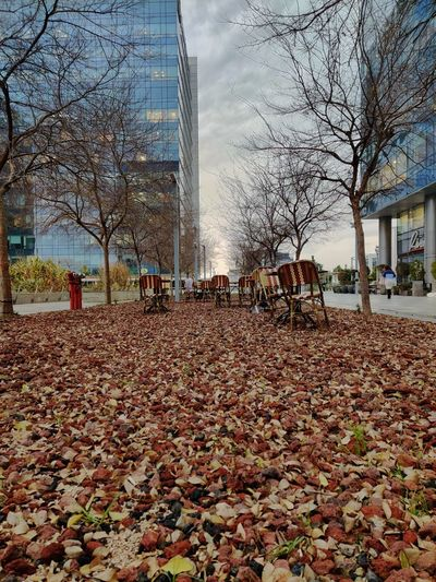 View of autumn leaves in park