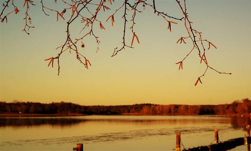 Sky Water Sunset Beauty In Nature Scenics - Nature Tranquility Lake Tranquil Scene Tree Nature No People Plant Non-urban Scene Orange Color Clear Sky Outdoors Idyllic Branch Bare Tree Autumn Autumn colors Lake View Monochrome rule of thirds Scenics