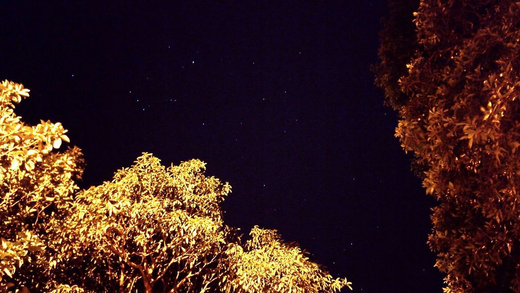 Night Star - Space Sky Low Angle View Tree Illuminated Astronomy