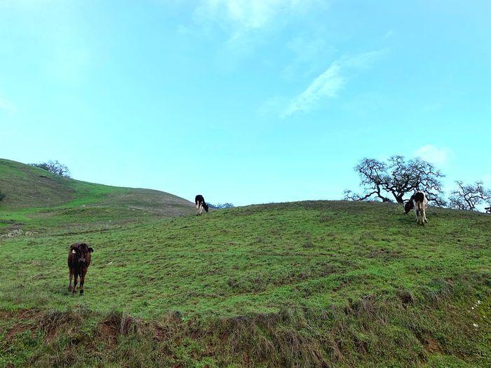 People walking on grassy field against sky