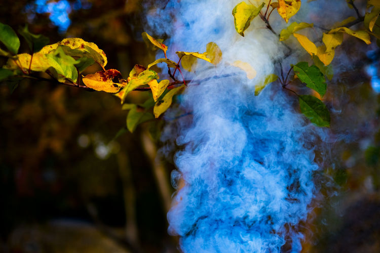 smoke and leaves.. Smoke Branch Leaves Leaves🌿 Leaves_collection Leaves 🍁 Autumn Autumn colors Autumn Leaves Autumn🍁🍁🍁 Fall Tree Leaf Autumn Close-up Branch Plant Life Autumn Mood